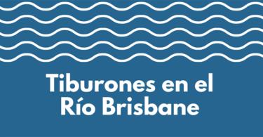 Tiburones de rio en el río Brisbane