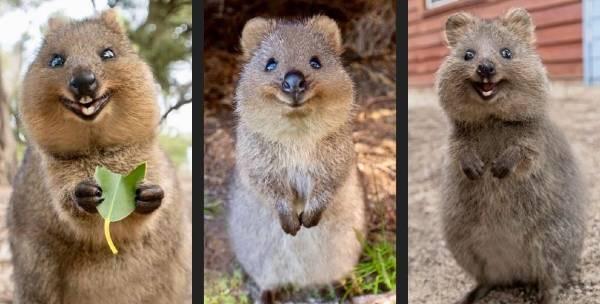 Ver animales únicos es una de las muchas ventajas de estudiar en Australia
